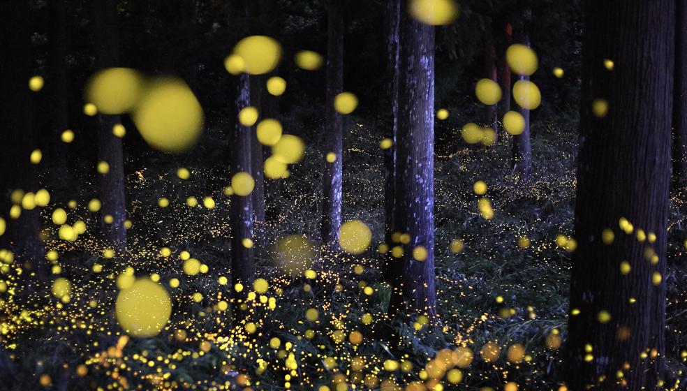 Getty Images - Nori Yuasa